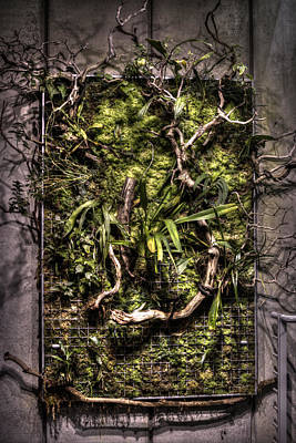 Natures Wall Art Print by Diego Re