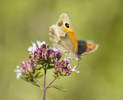 Photograph - Nature's Way by Steven Poulton