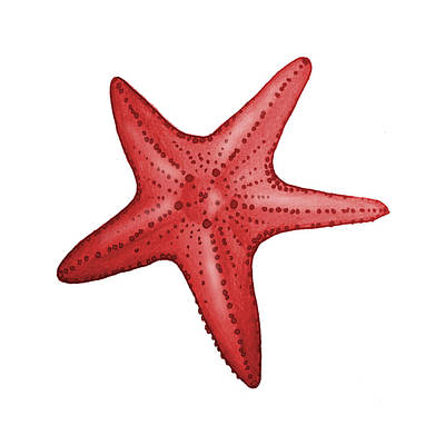 Coastal Digital Art - Nautical Red Starfish by Michelle Eshleman