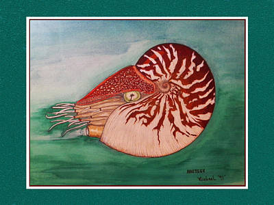 Painting - Nautilus In It's Shell Swimming by Michael Shone SR