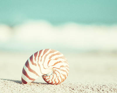 Beach Shell Sand Sea Ocean Photograph - Nautilus by Carolyn Cochrane