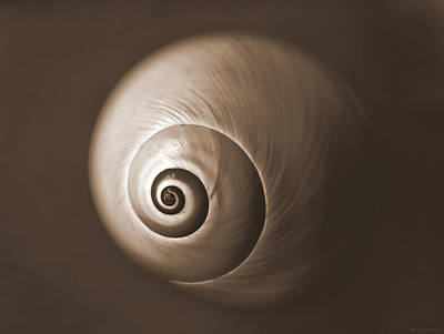 Photograph - Nautilus In Sepia by Deborah Smith