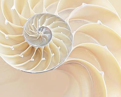 Nautilus Natural Cream Spiral Art Print by Gill Billington