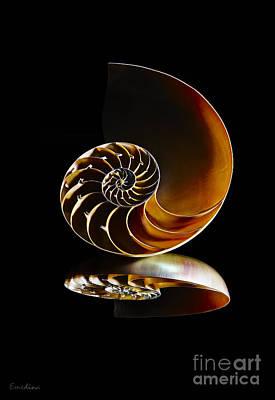 Eyzen Medina Photograph - Nautilus Reflection II by Eyzen M Kim
