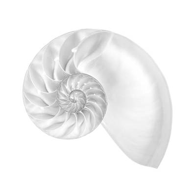 Specimen Photograph - Nautilus Shell Interior by Jim Hughes