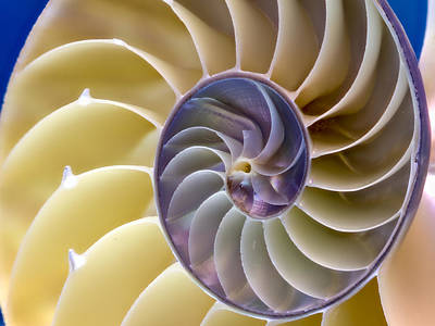 Photograph - Nautilus Side View by Jean Noren