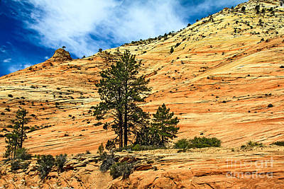 Photograph - Navajo Sandstone by Robert Bales