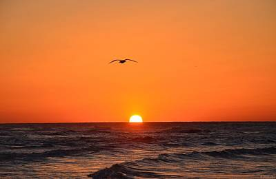 Photograph - Navarre Beach Sunrise Waves And Bird by Jeff at JSJ Photography