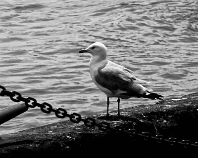Digital Art - Navy Pier Seagull by Chris Flees