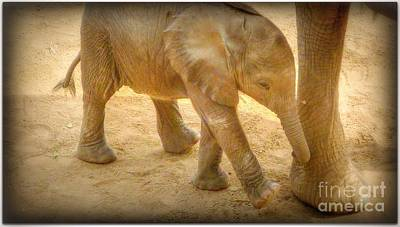 Photograph - Nearby Baby Elephant  by Susan Garren