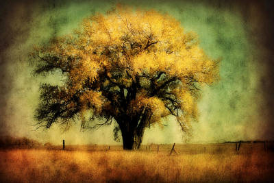 Country Cottage Photograph - Nebraska Cottonwood by Julie Hamilton