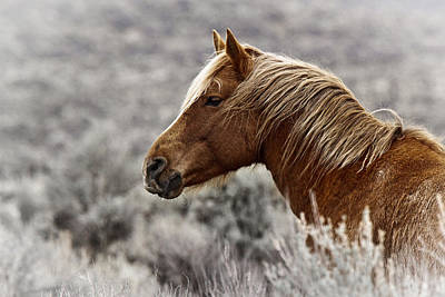Wild Horse Photograph - Neck Deep In Sagebrush by Wes and Dotty Weber