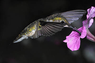 Photograph - Nectar Break by Theo OConnor