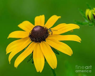 Photograph - Nectar Pot by Anthony Heflin