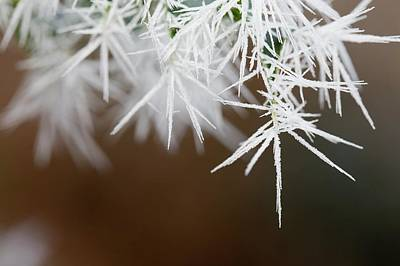 Winter Landscapes Photograph - Needle Ice On Holly Leaves by Ashley Cooper