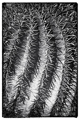 Photograph - Needles by John Rizzuto