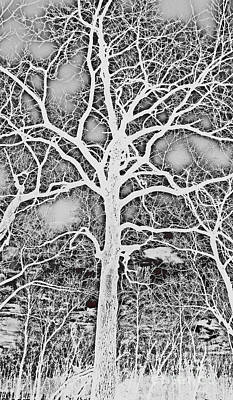 Negative Effect Digital Art - Negative Image Black And White Tree Branches Abstract Design by Adri Turner