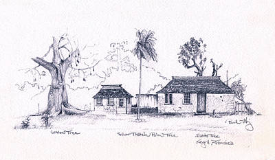 Drawing - Negril Trees by Paul Gaj