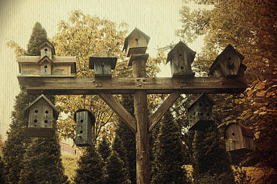 Photograph - Neighborhood Flock by Laurie Perry