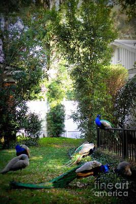 Photograph - Neighborhood Peacocks by Valerie Reeves