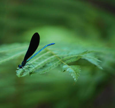 Photograph - Neon Blue And Quiet Too by Kandy Hurley