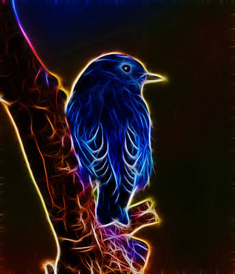 Photograph - Neon Bluebird by Shane Bechler
