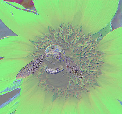 Photograph - Neon Bumble Bee by Belinda Lee
