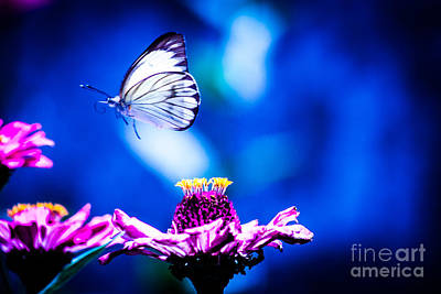 Photograph - Neon Butterfly by Carolina Mendez
