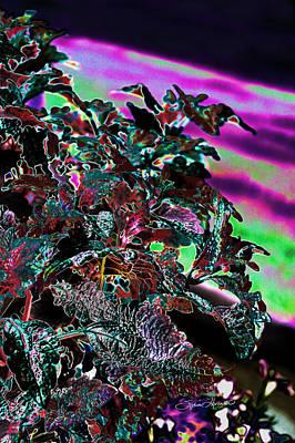 Dean Russo Photograph - Neon Coleus by Sylvia Thornton