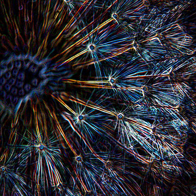 Abstract Digital Art Mixed Media - Neon Dandelion by Ernie Echols