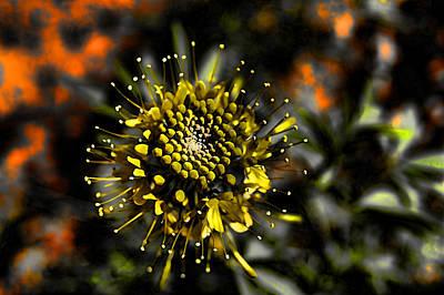 Photograph - Neon Flower by Kathy Churchman