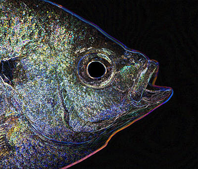Photograph - Neon Gill by John Crothers