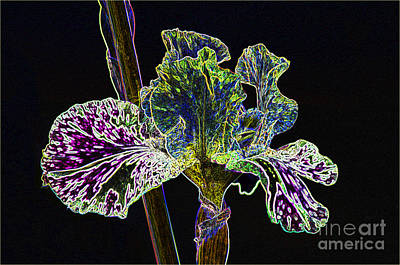 Photograph - Neon Iris by Louise Magno