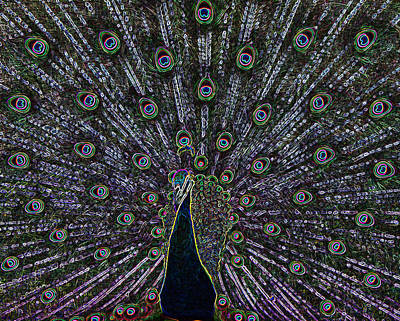 Photograph - Neon Peacock by Ernie Echols