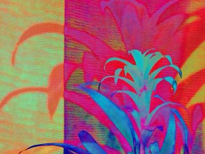 Painting - Neon Pineapple Plant - Horizontal by Lyn Voytershark