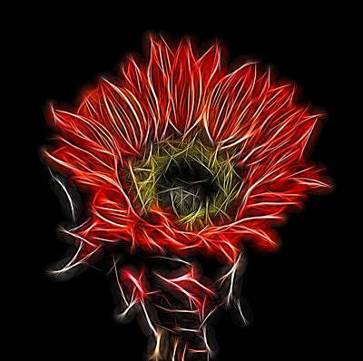 Photograph - Neon Red Sunflower by Judy Vincent