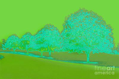 Photograph - Neon Trees by Karen Adams