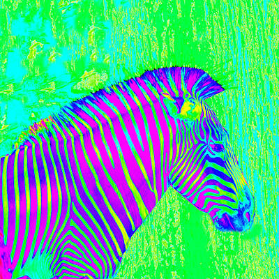 Painting - Neon Zebra 2 by Jane Schnetlage