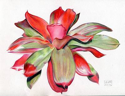 Painting - Neoregelia 'magali' by Penrith Goff