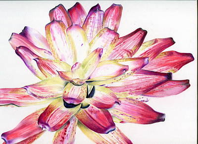 Painting - Neoregelia Picasso by Penrith Goff