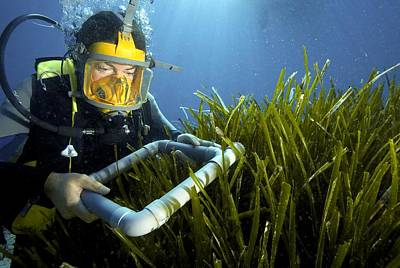 Neptune Islands Photograph - Neptune Grass Research by Science Photo Library