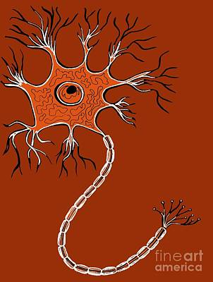 Ranvier Photograph - Nerve Cell, Illustration by Claudia Stocker