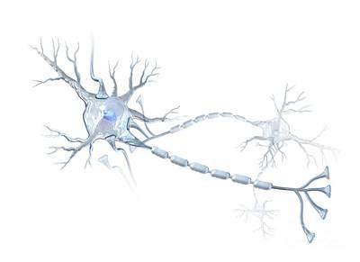 Ranvier Photograph - Nerve Cells, Artwork by Henning Dalhoff