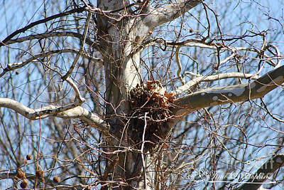 Photograph - Nest 20120314_130a by Tina Hopkins