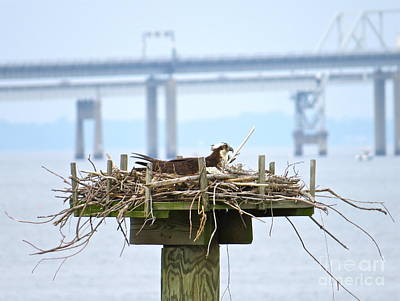 Photograph - Nest All Finished  by Nancy Patterson
