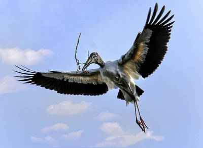 Photograph - Nest Building Woodstork by Donald Brown