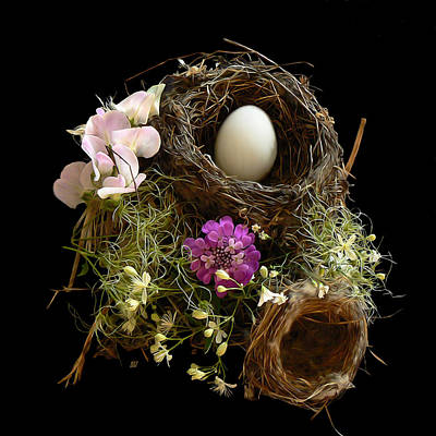 Nest Egg Print by Barbara St Jean