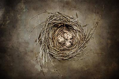 Bird Nest Photograph - Nest Eggs by Carol Leigh