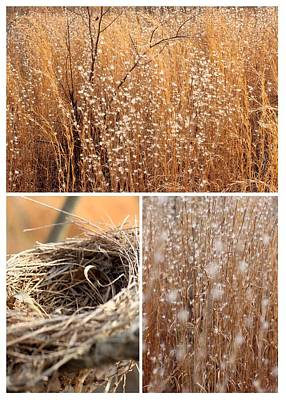Photograph - Nest Field by AR Annahita