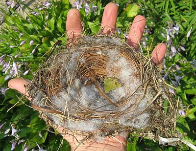 A Nest In Hand Art Print by Bruce Carpenter